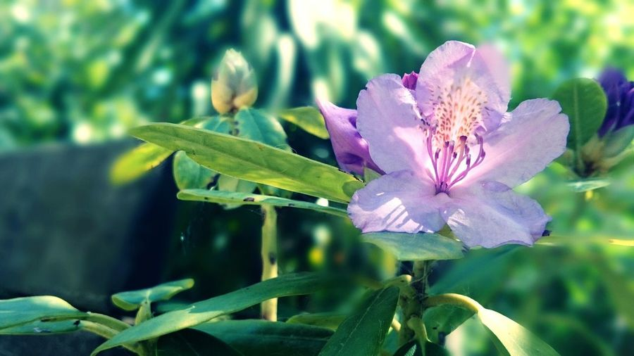 Colori di primavera Spring Flower Flowerporn Flower Collection Flowers,Plants & Garden Spring Flowers Spring Time Colorful Colour Explosion Macro_flower