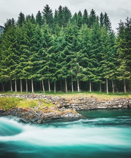 Trees and water Nature Tree Water Pinaceae Pine Tree Green Color Landscape Lush Foliage Woods Green Lakeside Growing Tranquil Scene Stream Idyllic Forest Shore Countryside