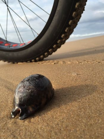 Sea Sea And Sky Ocean Water Nature Outdoors Bicycle Cowry Shell Tranquil Scene Travel Contrast Size Sand Sea Tyre Excersize The Great Outdoors - 2017 EyeEm Awards