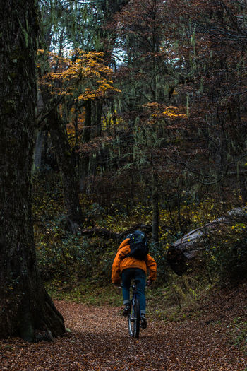 Rear view of man riding bicycle in forest