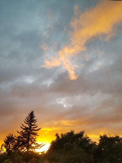 While I was enjoying the sunset the other night this orange twisted cloud went drifting by. Sunset Tree Dramatic Sky Silhouette Forest Scenics Beauty In Nature No People Pine Tree Multi Colored Looking Through Window No Edit/no Filter Cloud - Sky