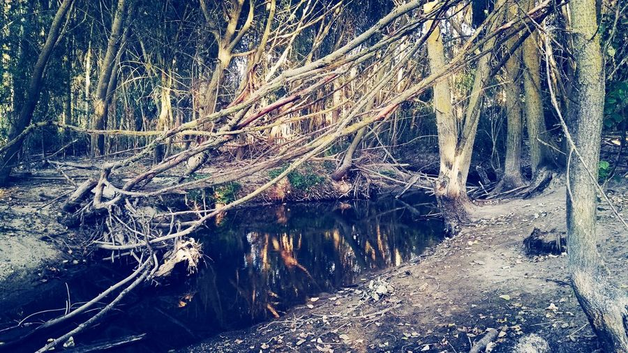 Trees in the forest Water Tree Trunk Tree Forest Tranquility Tranquil Scene Non-urban Scene Scenics Nature Reflection Growth Stream Branch Beauty In Nature Outdoors WoodLand Day Wetland Standing Water Majestic