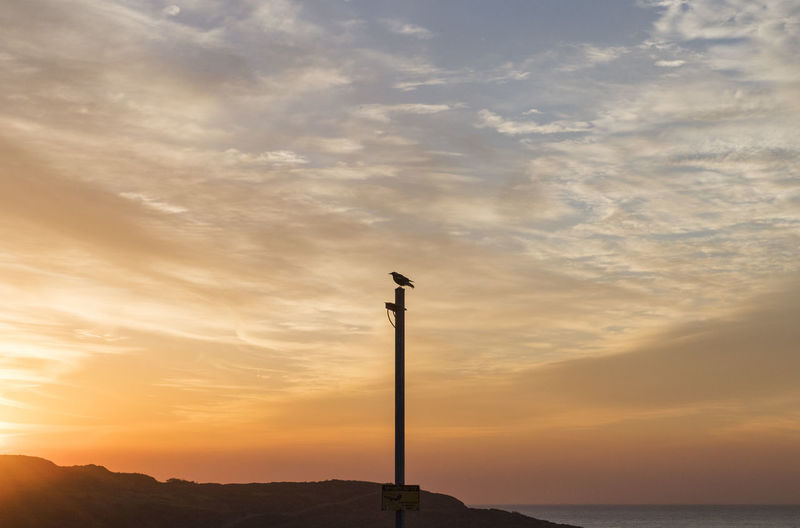 Silhouette bird on wooden post by sea against sky during sunset