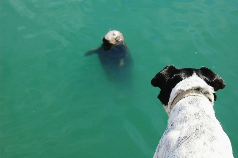 High angle view of dog looking at sea lion in water