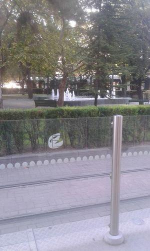 Outdoors Tree Day No People City Tree City Walking People Enjoying Life Make ıt Yourself Eskisehir City