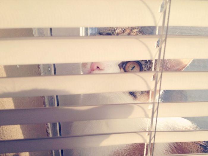 Photography Cat Kitty Kitten Sunny Blinds Goodmorning Animals