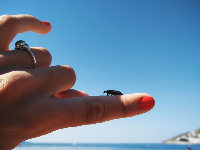 Cropped Hand With Insect By Sea Against Clear Sky