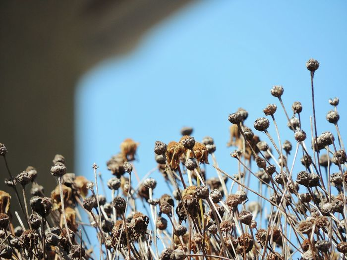 Close-Up Of Flowers Against Blue Sky