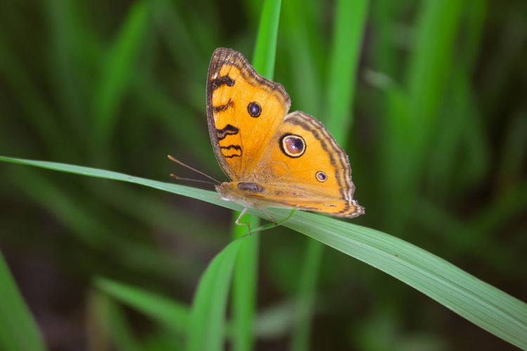 Close-up of butterfly on orange leaf