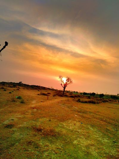 Sunset in rural Sunset Landscape Field Outdoors Agriculture No People Grass Tree Area Nature First Eyeem Photo