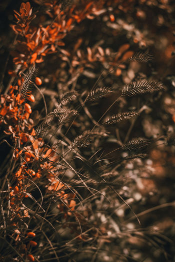 Plant Stem Twig