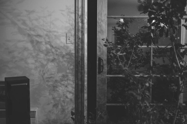 Abandoned Blackandwhite Close-up Day Decay Growth Indoors  Nature No People Plant Technology Tree Window