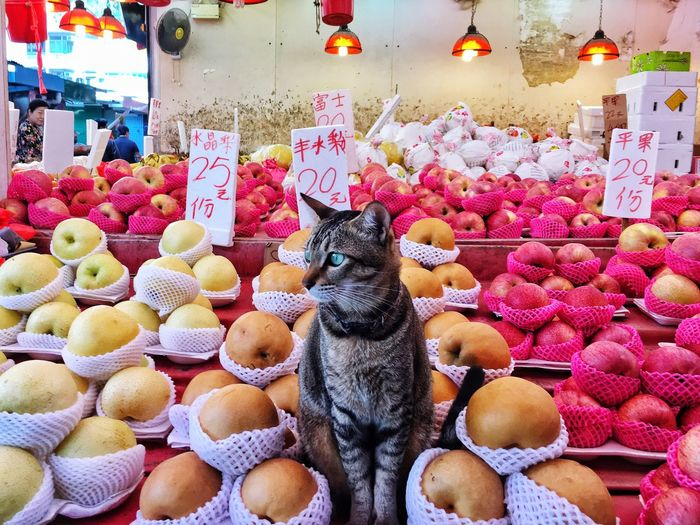 View Of Cat Among Fruits For Sale At Market Stall
