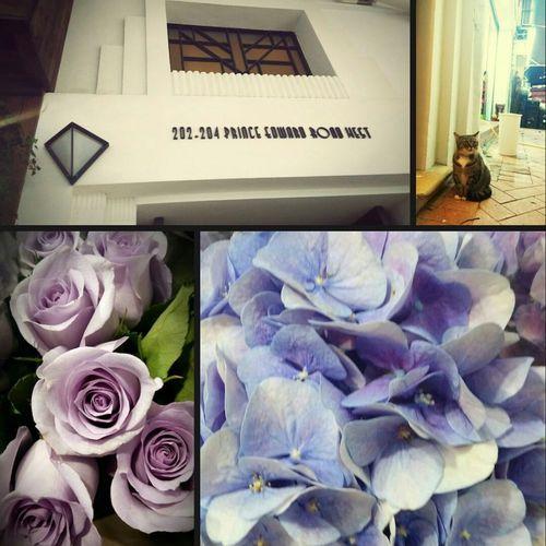 Taking Photos Photo Of Photo Purple Tones