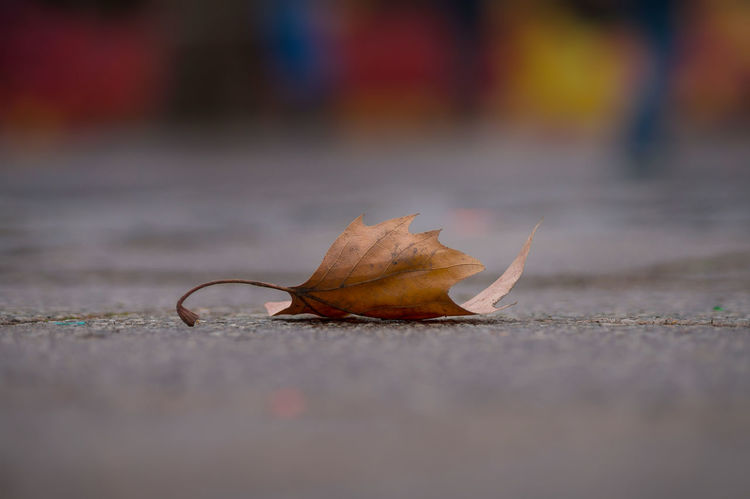 Close-up of a brown dried Leaf on the Asphalt in Autumn. Leaf Autumn Cold Temperature Asphalt Ground Soil Season  Change Tranquility Lonely Falling Close-up Plant Part Dry No People Nature Fragility Road Single Object Street Maple Leaf Natural Condition Colors Focus On Foreground Symbol Selective Focus Still Life City Leaves Outdoors