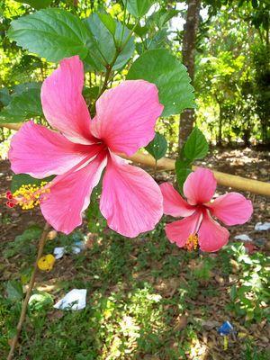 No filter baby. Flowers Pink Yeaaah