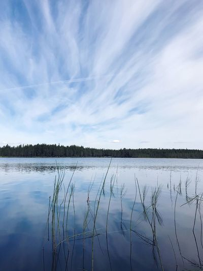 Sky Water Tranquility Cloud - Sky Scenics - Nature Tranquil Scene Reflection Lake Beauty In Nature Day Nature No People Plant Outdoors Rural Scene Idyllic Environment Landscape Non-urban Scene