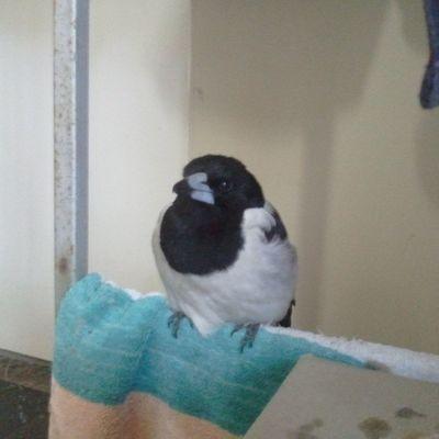 A little bird I once saved =) Birds Cute