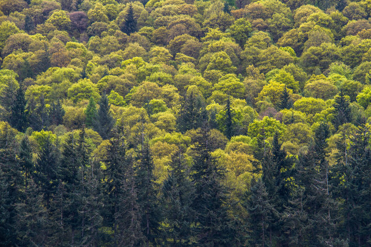 Treescape TreePorn Trees