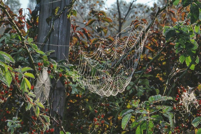 Beautiful little works of art....👌 Check This Out Spiderweb Work Of Art Web Beautiful Nature EyeEm Nature Lover Deceptively Simple Autumn🍁🍁🍁 Fall Beauty Morning Dew