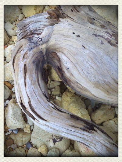 Tree root Geocaching Artisignis Beach Old Tree