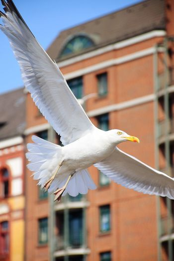 Seagull flying in a building