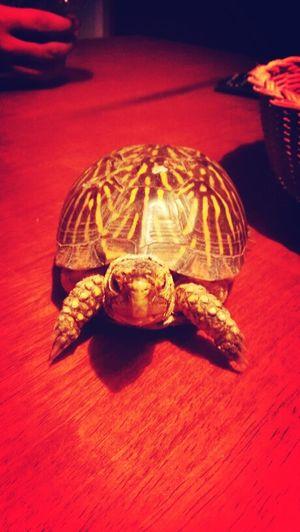 Donatello!!