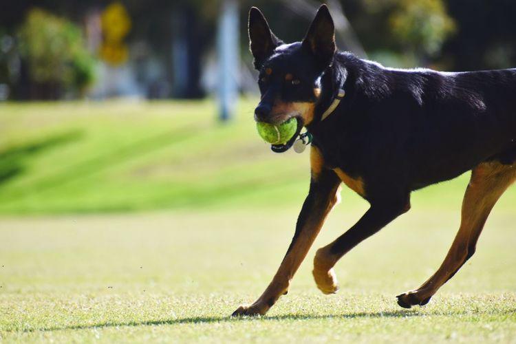 Close-up of a dog running on grass