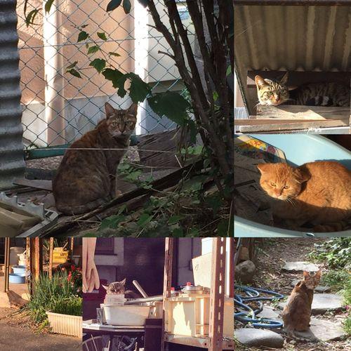 最近会った猫たち 猫ならなんでもいいわけじゃない うまく撮れてる作品ばかり しがないiPhone野郎は デザインと構図と色で 勝負w なわけないす 自己満足自己満足 アレクより人気な猫に親バカは 少し嫉妬