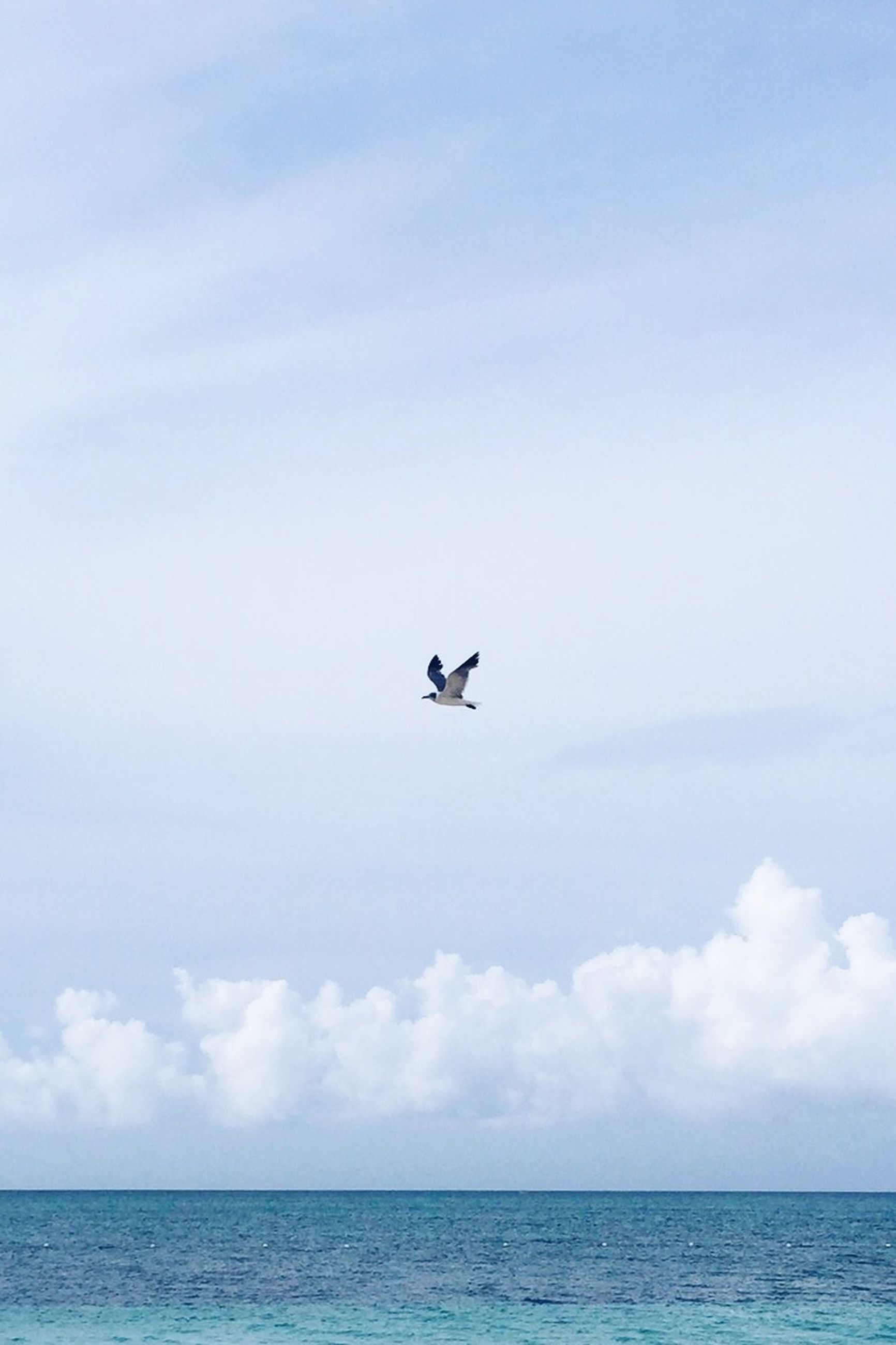 sea, bird, animal themes, horizon over water, flying, one animal, sky, wildlife, animals in the wild, water, waterfront, nature, tranquil scene, tranquility, seagull, beauty in nature, scenics, spread wings, copy space, cloud - sky