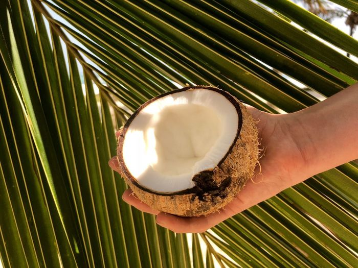 Food And Drink Human Hand Human Body Part Coconut One Person Food Holding