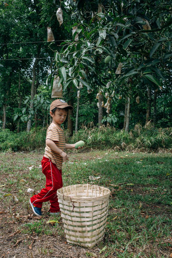Young kid harvesting mangoes in a farm. Casual Clothing Child Childhood Elementary Age Farm Farming Grass Green Color Growth Harvest Harvesting Innocence Kid Leaf Lifestyles Mango Nature Tree Vacations Young