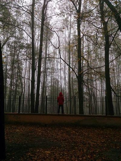 Parc Natural del Montseny. Catalunya.