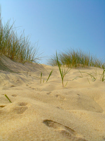 Sand Beach Sky Nature Sand Dune Blue Clear Sky No People Landscape Outdoors Day Beauty In Nature Desert Sunlight Norfolk Holkham Beach