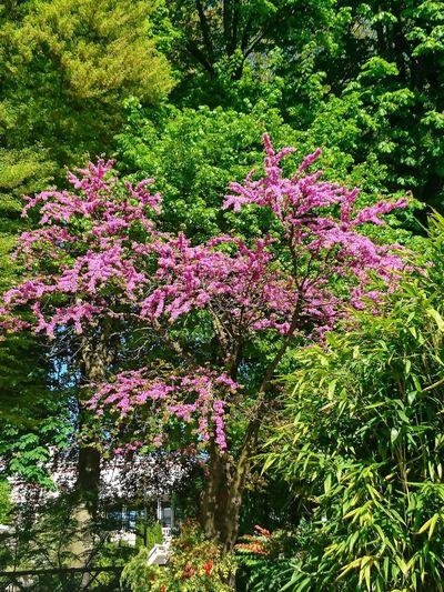 Nature France Aix Les Bains