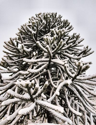 Winter wonderland! So pretty 😊❄ EyeEm Nature Lover Tree Beauty In Nature Nature Snow Snow ❄ Scenery Enjoying Life Enjoying The View Winter Wintertime Winter Wonderland Scenics Pinaceae Day Outdoors Sky Close-up EyeEmNewHere No People Focus On Foreground Shades Of Winter