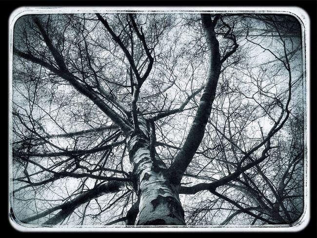 Trees Exploring Taking Photos Blackandwhite