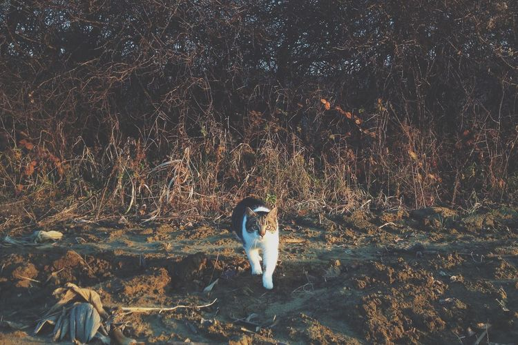 Cat Cold Day Landcape Light Nature One Animal Out Outdoor Outdoors Sun Tree Trees Winter