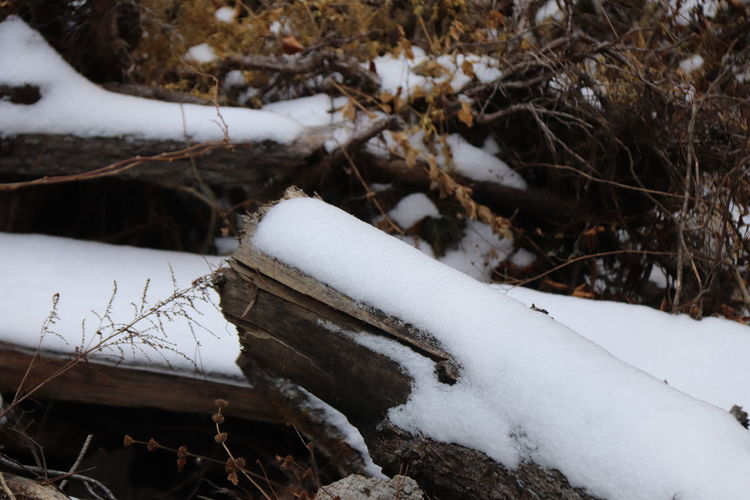 Snow covered log on field during winter