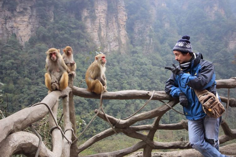 Man standing by monkeys on fence against mountain