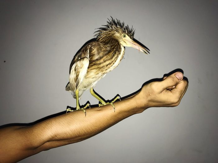 Animal Themes Animal Animal Wildlife Animals In The Wild One Animal Human Body Part Human Hand Hand Close-up Body Part Bird