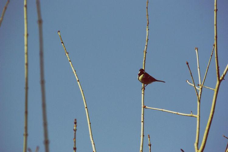春ですよ。 四十雀 野鳥