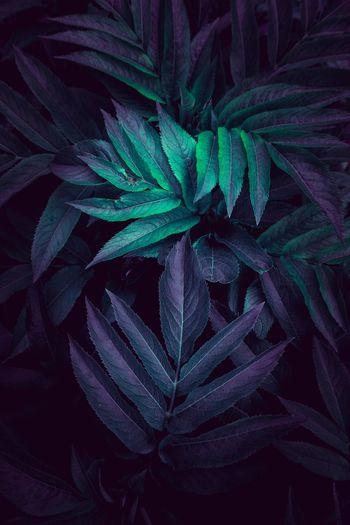 Full frame shot of plant leaves