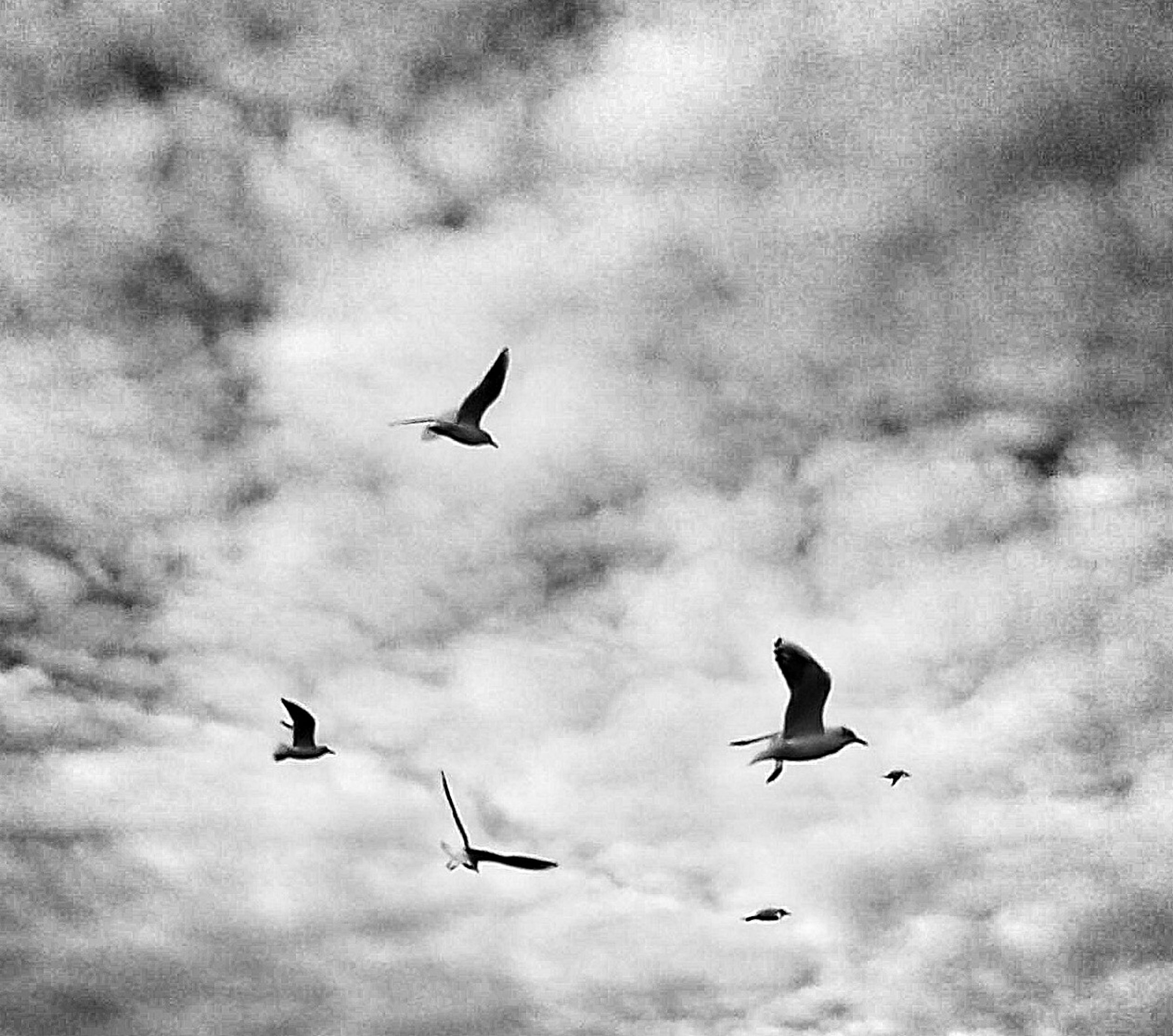 flying, bird, animal themes, animals in the wild, spread wings, wildlife, mid-air, sky, low angle view, cloud - sky, cloudy, cloud, nature, motion, seagull, silhouette, beauty in nature, outdoors, overcast, on the move