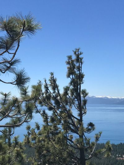Tahoe unfiltered..... Sky Tree Plant Tranquility Nature Water Beauty In Nature Growth No People Day Clear Sky Tranquil Scene Scenics - Nature Blue Sea Sunlight Outdoors Low Angle View Branch