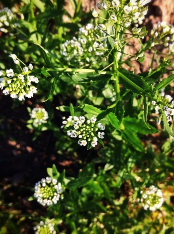 These are probably weeds....but they are pretty weeds! Green Outdoors Nature_collection
