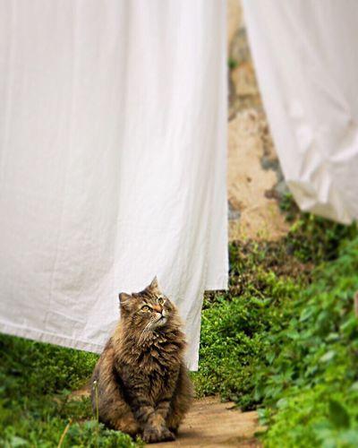 "Él es... ""Rayitas"" 😺 Cat Pets Gato"