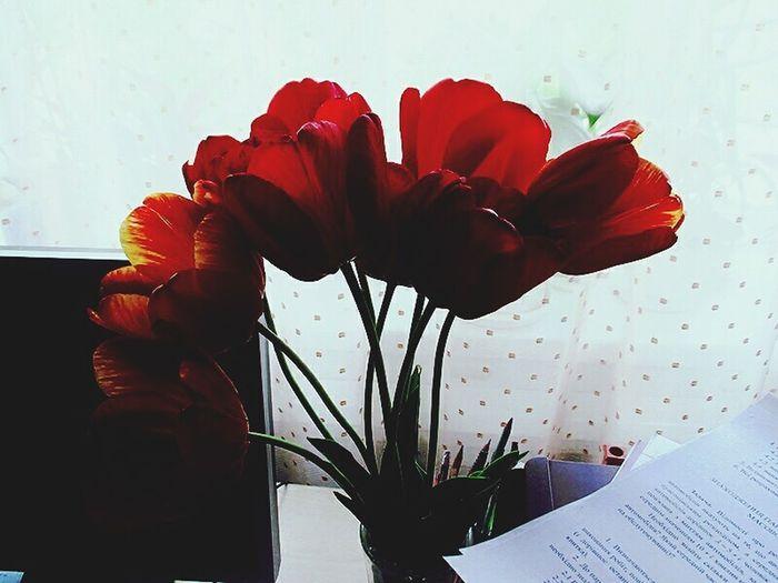 Flowers Window Flowers On Table