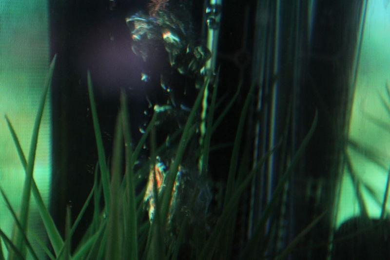 Art Art Center ArtWork Blade Of Grass Bubbles Close-up Fish Bowl Green Green Color Illuminated Modern Art PaikNamJun Selective Focus The Magic Mission Capturing Motion