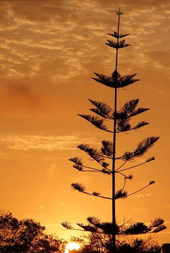 Lima Sunset Hugging A Tree My Dream Sky